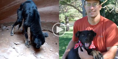 Guy Rescues Dog Abandoned at the Bottom of a 350 ft Canyon and Now They're BestBuds