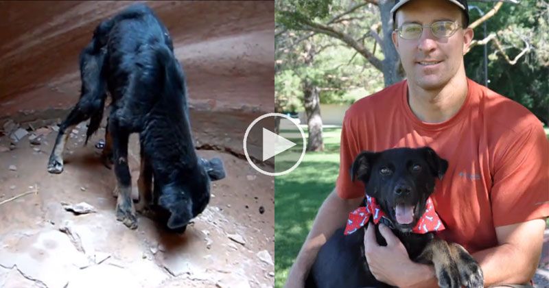 Guy Rescues Dog Abandoned at the Bottom of a 350 ft Canyon and Now They're Best Buds