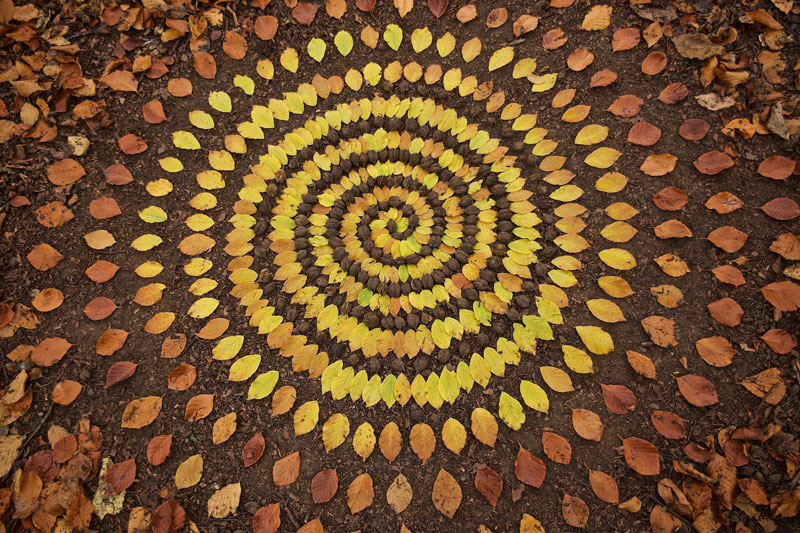 Artist Arranges Natural Objects Into Ephemeral Patterns And Designs Delectable Patterns And Designs
