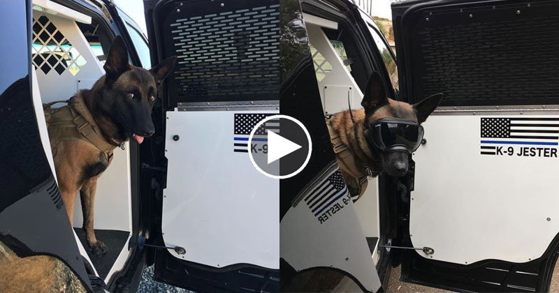 K9 Police Dog Makes the Best Entrances Ever