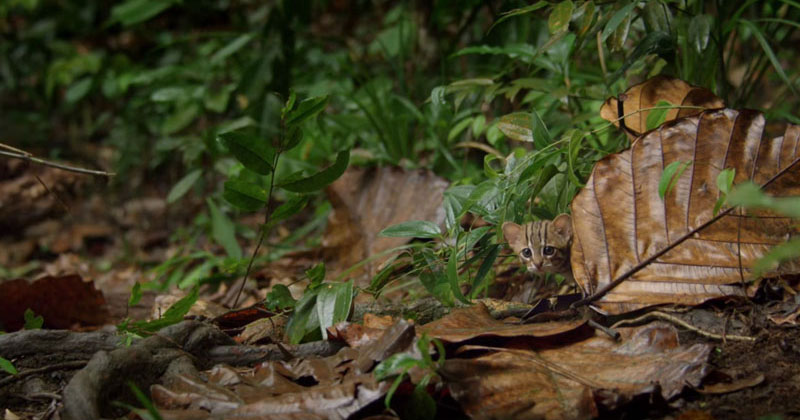 The World's Smallest Cat is Ridiculously Adorable and there are Photos to ProveIt