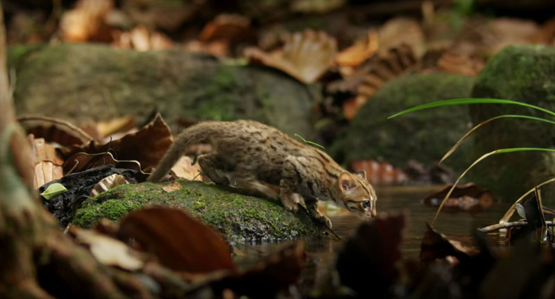 worlds smallest cat 4 The Worlds Smallest Cat is Ridiculously Adorable and there are Photos to Prove It