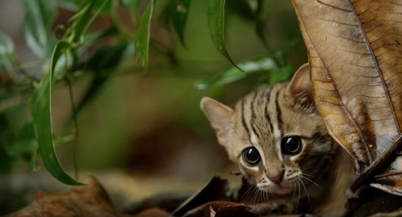 worlds smallest cat 7 The Worlds Smallest Cat is Ridiculously Adorable and there are Photos to Prove It