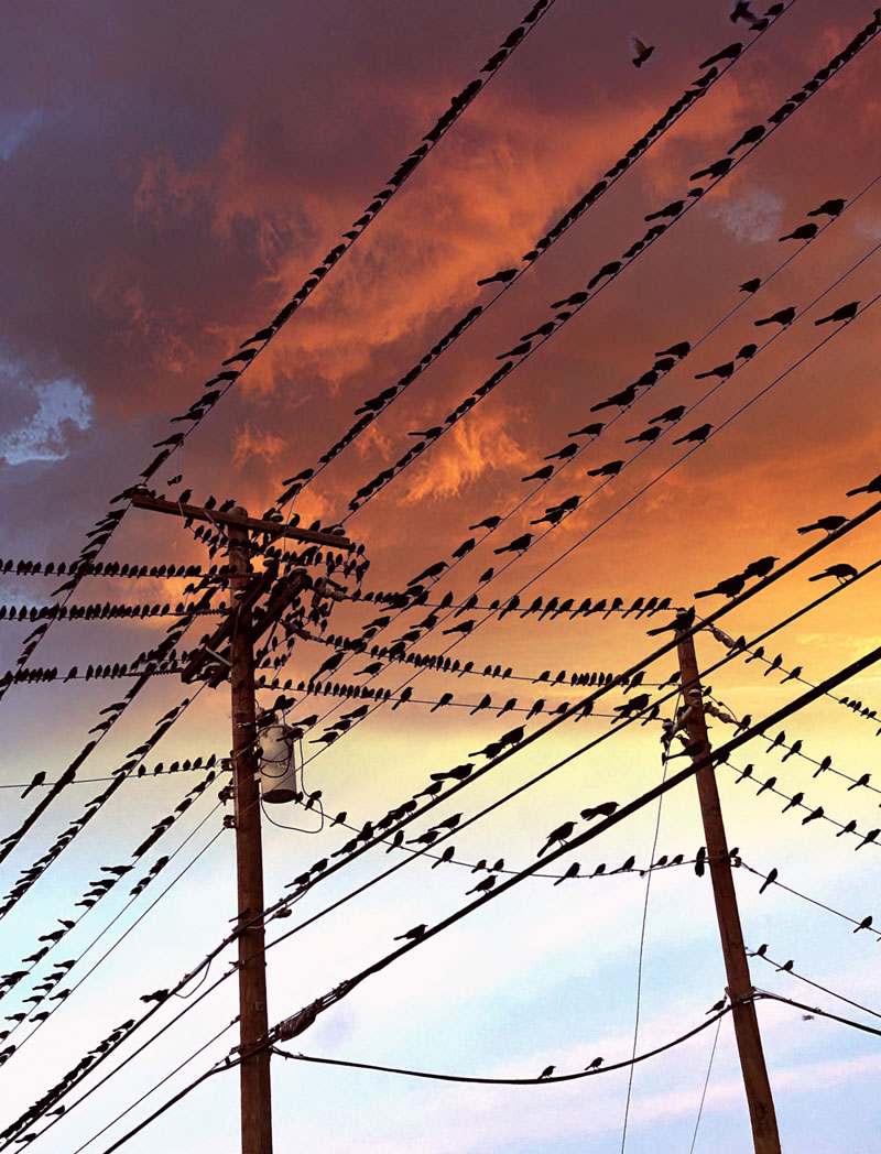 birds on a wire Birds on a Wire