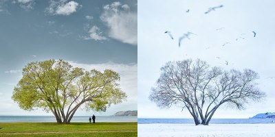 The Broccoli Tree: A Parable on Love, Loss and the HumanCondition