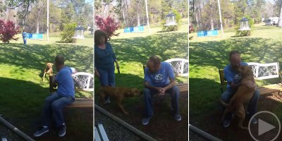 Dog Doesn't Recognize Owner After Losing 50 lbs Until He Sniffs Him