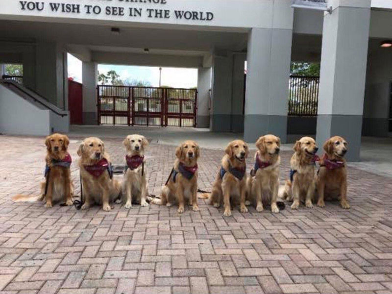 therapy dogs waiting to welcome back the parkland high school students Therapy Dogs Waiting to Welcome Back the Parkland High School Students