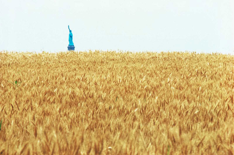 wheatfield by agnes denes 10 In 1982, An Artist Harvested Two Acres of Wheat on Land Worth $4.5 Billion