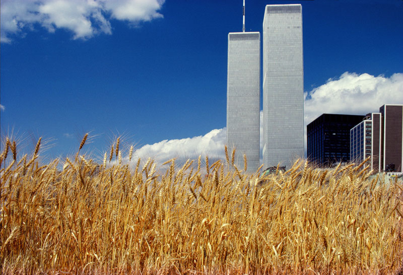 wheatfield by agnes denes 3 In 1982, An Artist Harvested Two Acres of Wheat on Land Worth $4.5 Billion