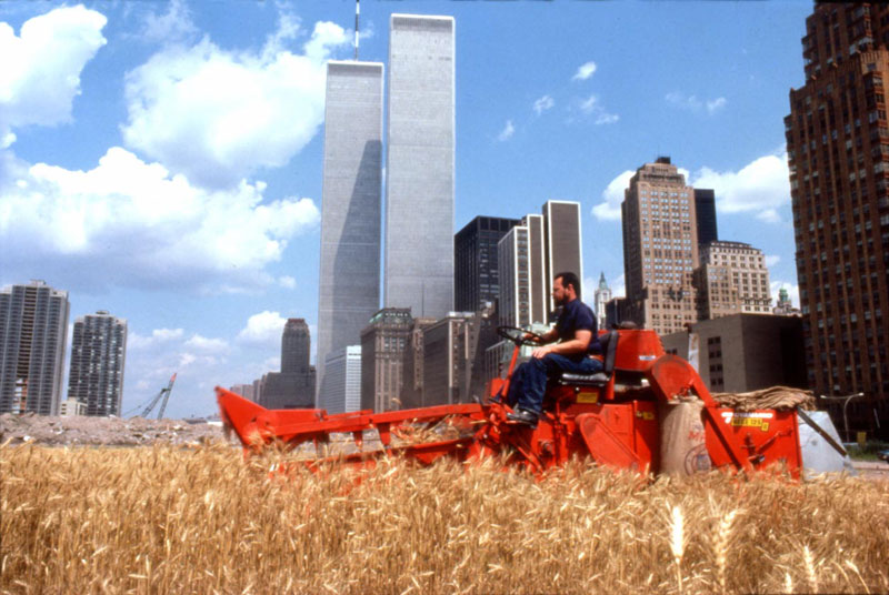 wheatfield by agnes denes 5 In 1982, An Artist Harvested Two Acres of Wheat on Land Worth $4.5 Billion