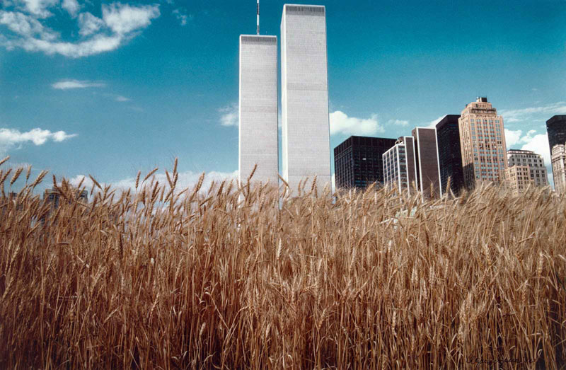 wheatfield by agnes denes 9 In 1982, An Artist Harvested Two Acres of Wheat on Land Worth $4.5 Billion