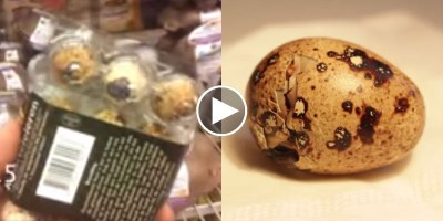 Guy Incubates Quail Egg He Bought at a Supermarket and Holy Sh*t