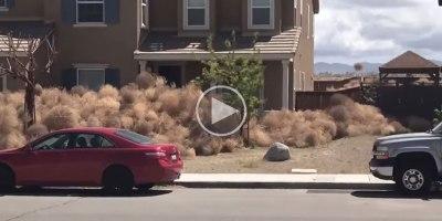 Neighborhood in California Gets Buried inTumbleweeds