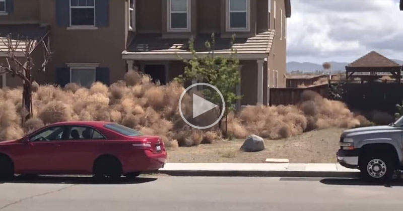 Neighborhood in California Gets Buried in Tumbleweeds