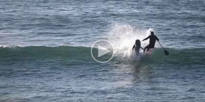 Dolphin Body Slams Boarder for Captive SeaWorldBrethren
