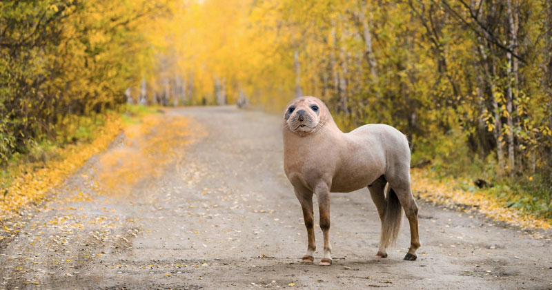 This Guy Combines Animals in Photoshop and Now I Don't Know What's Real