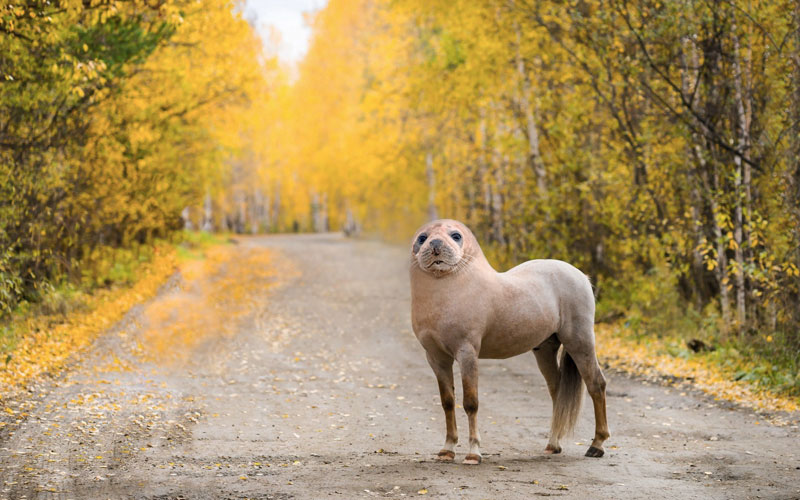 horseal This Guy Combines Animals in Photoshop and Now I Dont Know Whats Real