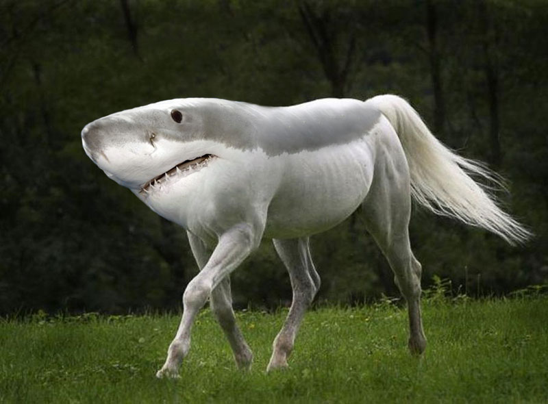 shorse This Guy Combines Animals in Photoshop and Now I Dont Know Whats Real
