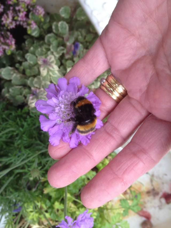 woman rescues wingless queen bee builds her a tiny garden to live out final days 12 Woman Rescues Wingless Queen Bee; Builds Her a Tiny Garden to Live Out Final Days