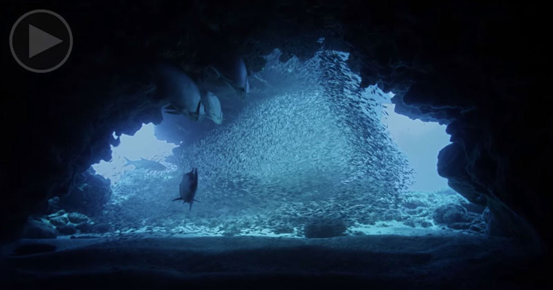The Underwater Cinematography in This BBC Clip is Incredible