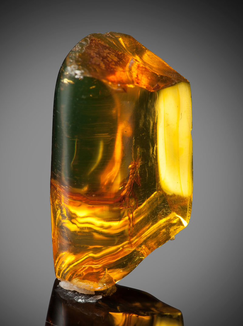a 12 million year old praying mantis encased in amber 2 A 12 Million Year Old Praying Mantis Encased in Amber