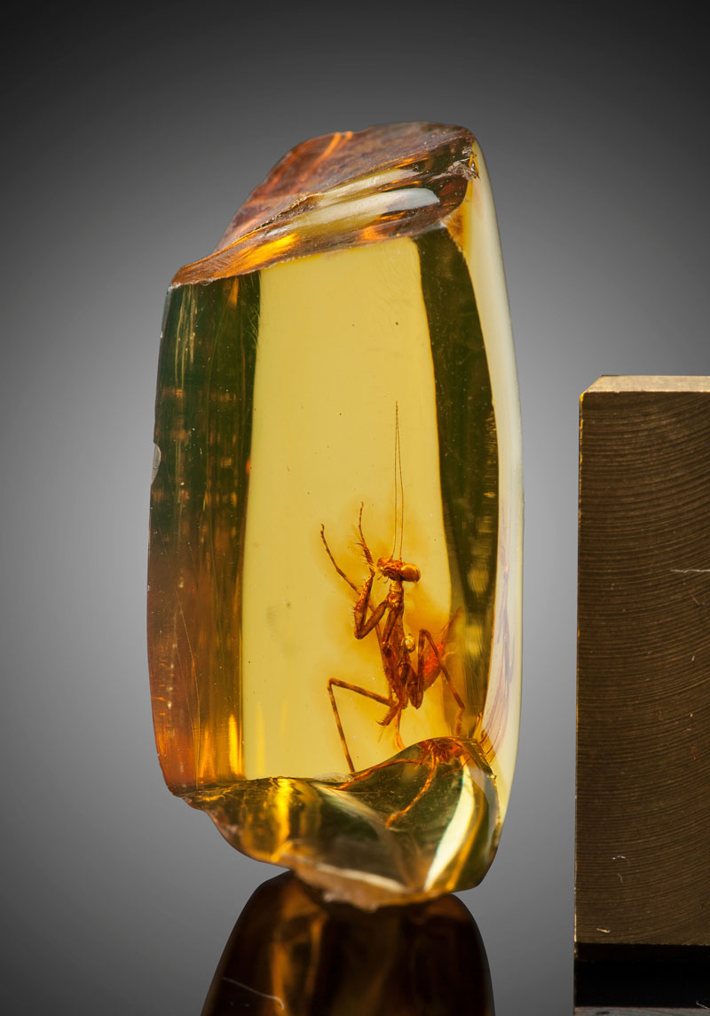 a 12 million year old praying mantis encased in amber 5 A 12 Million Year Old Praying Mantis Encased in Amber