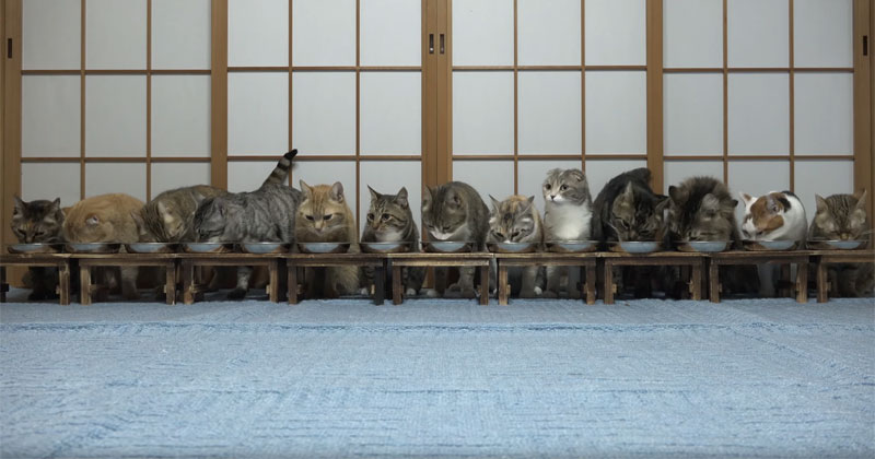 13 Cats Were All Eating in Harmony When Suddenly
