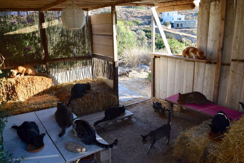 job post goes viral as cat sanctuary on greek island seeks caretaker 11 Job Post Goes Viral As Cat Sanctuary on Greek Island Seeks Caretaker