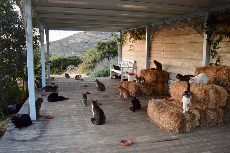 job post goes viral as cat sanctuary on greek island seeks caretaker 4 Job Post Goes Viral As Cat Sanctuary on Greek Island Seeks Caretaker