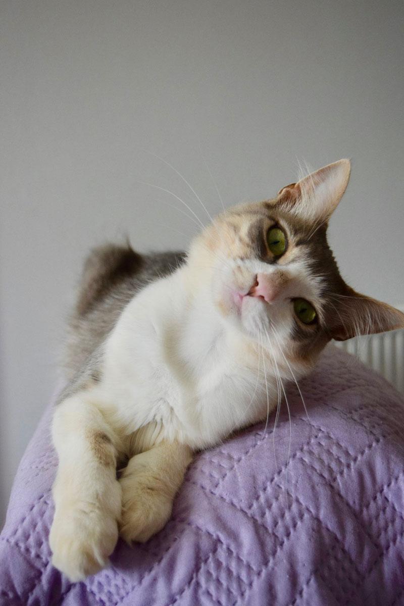 job post goes viral as cat sanctuary on greek island seeks caretaker 5 Job Post Goes Viral As Cat Sanctuary on Greek Island Seeks Caretaker