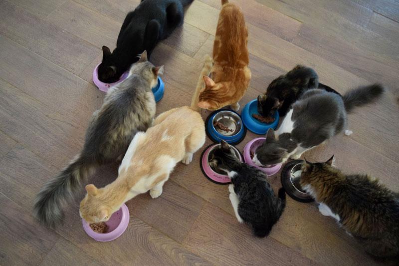 job post goes viral as cat sanctuary on greek island seeks caretaker 6 Job Post Goes Viral As Cat Sanctuary on Greek Island Seeks Caretaker