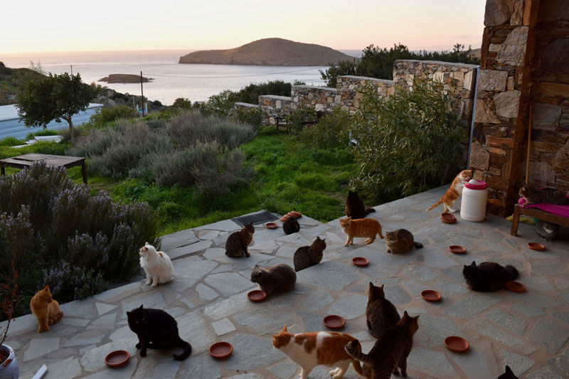 Job Post Goes Viral As Cat Sanctuary on Greek Island Seeks Caretaker