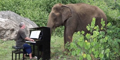 Playing 'Clair de Lune' on Piano for an 80 Year OldElephant