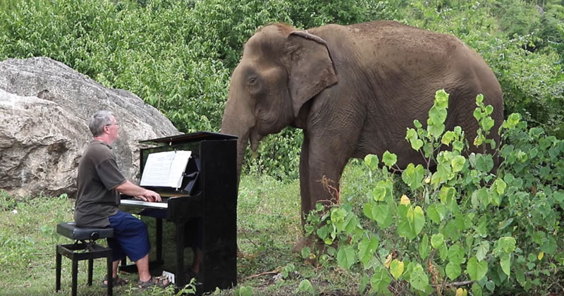 Playing 'Clair de Lune' on Piano for an 80 Year Old Elephant