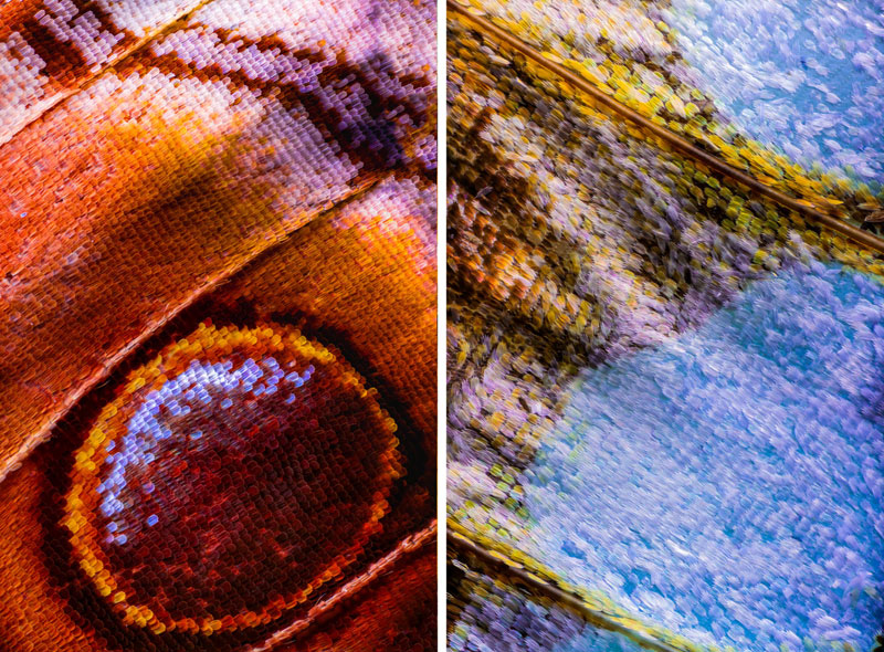 extreme close ups of butterfly wings by chris perani 6 Extreme Close Ups of Butterfly Wings by Chris Perani