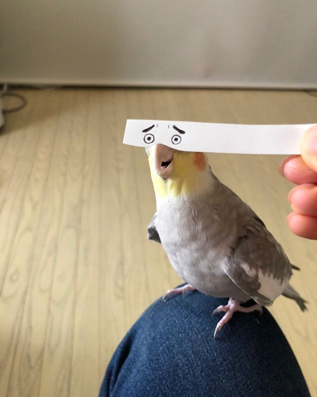 bird with funny eyes on strip of paper 2 Using a Strip of Paper to Give Birds Funny Eyes is Ingenious