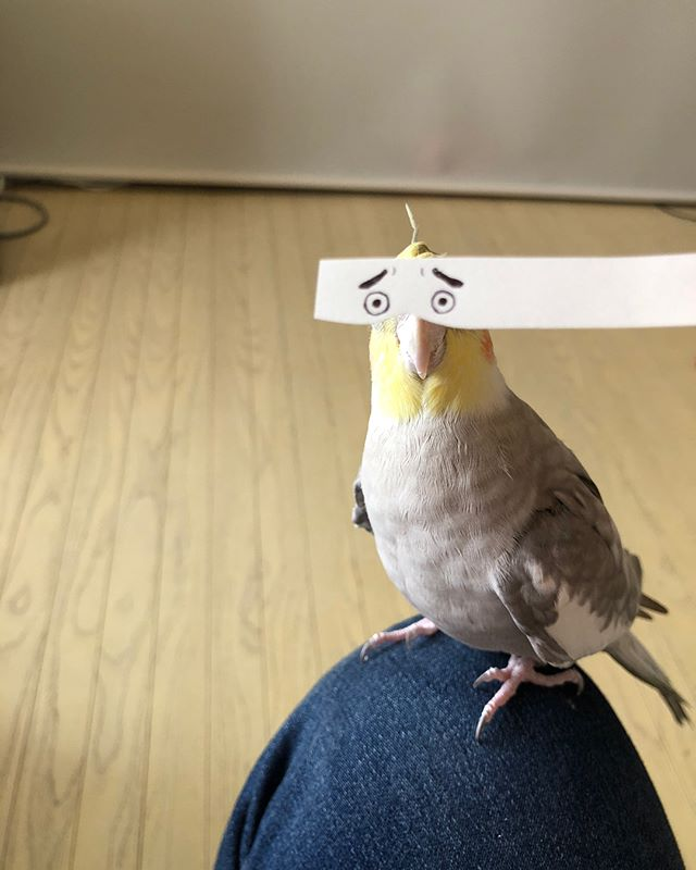 bird with funny eyes on strip of paper 4 Using a Strip of Paper to Give Birds Funny Eyes is Ingenious