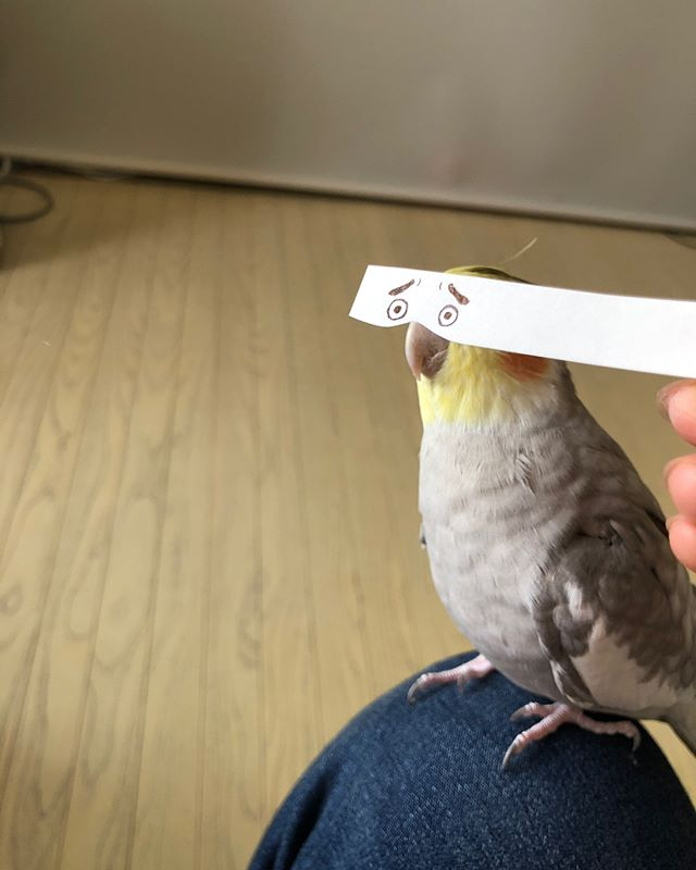 bird with funny eyes on strip of paper 5 Using a Strip of Paper to Give Birds Funny Eyes is Ingenious