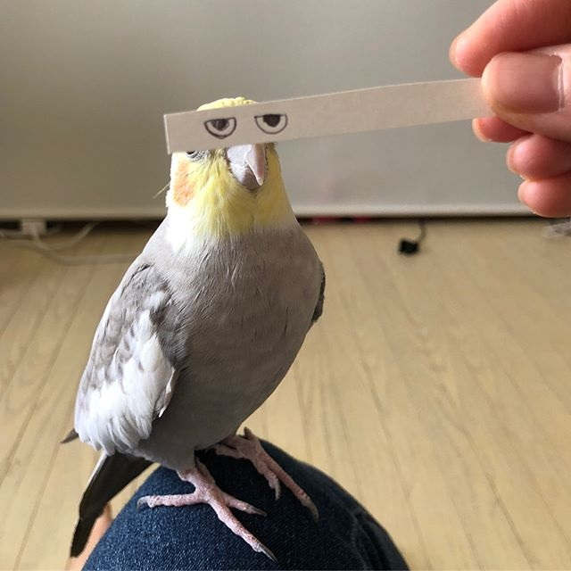 bird with funny eyes on strip of paper 6 Using a Strip of Paper to Give Birds Funny Eyes is Ingenious