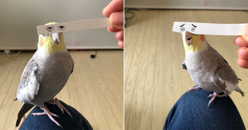 Using a Strip of Paper to Give Birds Funny Eyes is Ingenious
