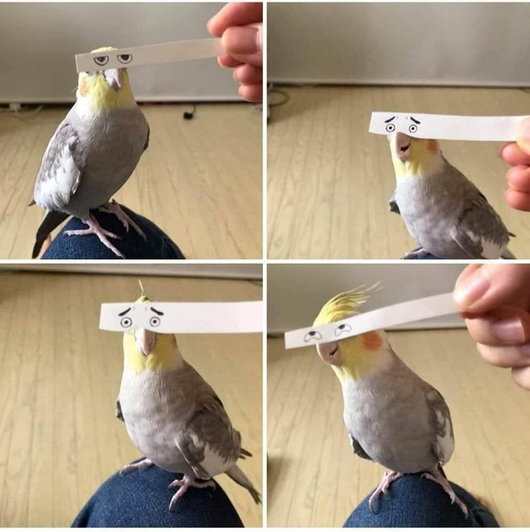 bird with funny eyes on strip of paper 9 Using a Strip of Paper to Give Birds Funny Eyes is Ingenious