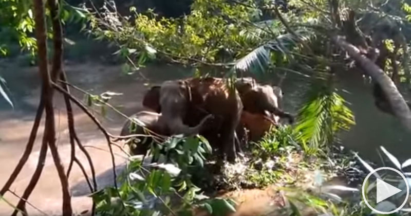 Elephants Salute People Who Rescued Their Baby Elephant From aDitch