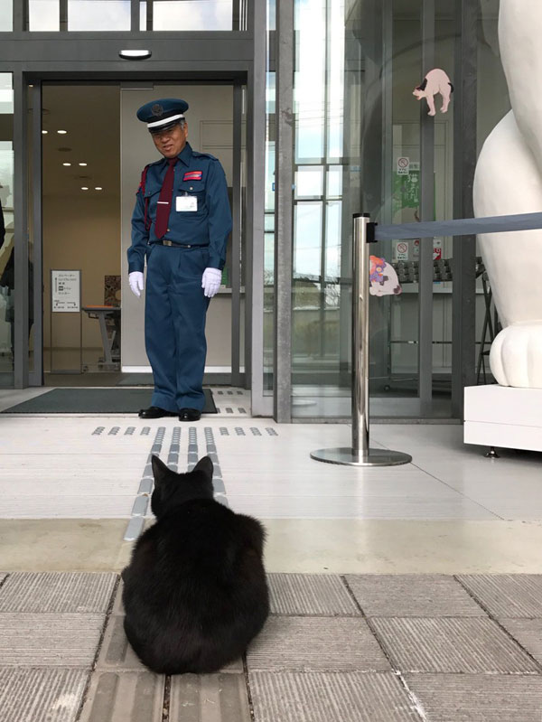 museum cats japan 1 Two Cats Have Been Trolling Museum Security for Over 2 Years Now