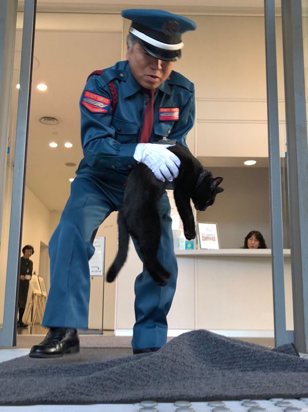 museum cats japan 11 Two Cats Have Been Trolling Museum Security for Over 2 Years Now