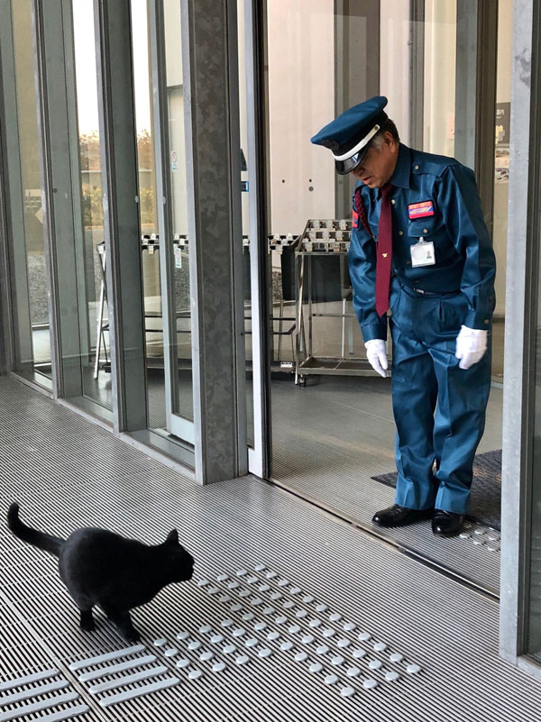museum cats japan 12 Two Cats Have Been Trolling Museum Security for Over 2 Years Now