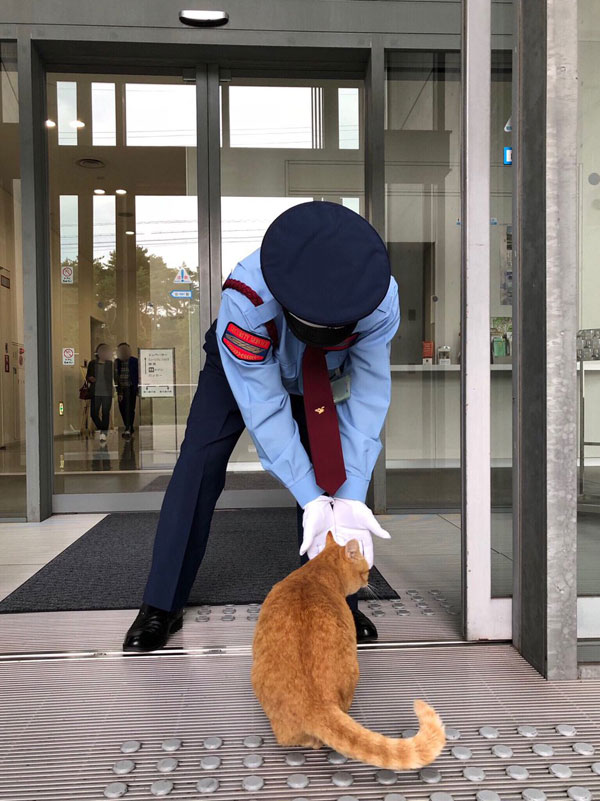 museum cats japan 15 Two Cats Have Been Trolling Museum Security for Over 2 Years Now