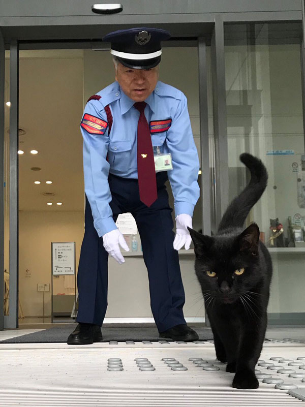 museum cats japan 16 Two Cats Have Been Trolling Museum Security for Over 2 Years Now