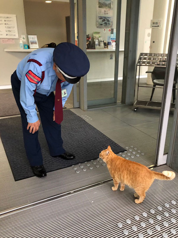 museum cats japan 17 Two Cats Have Been Trolling Museum Security for Over 2 Years Now