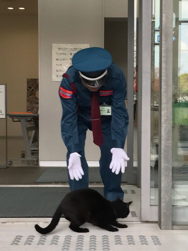 museum cats japan 2 Two Cats Have Been Trolling Museum Security for Over 2 Years Now