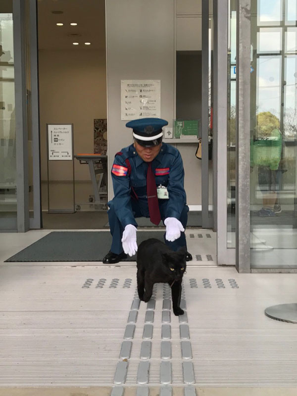 museum cats japan 4 Two Cats Have Been Trolling Museum Security for Over 2 Years Now